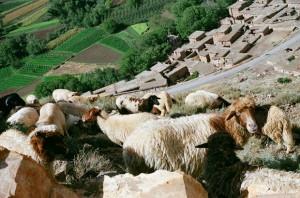 troupeau vallée (Copier)