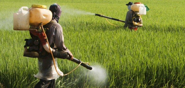 pesticides_field_guys_735_350-735x350