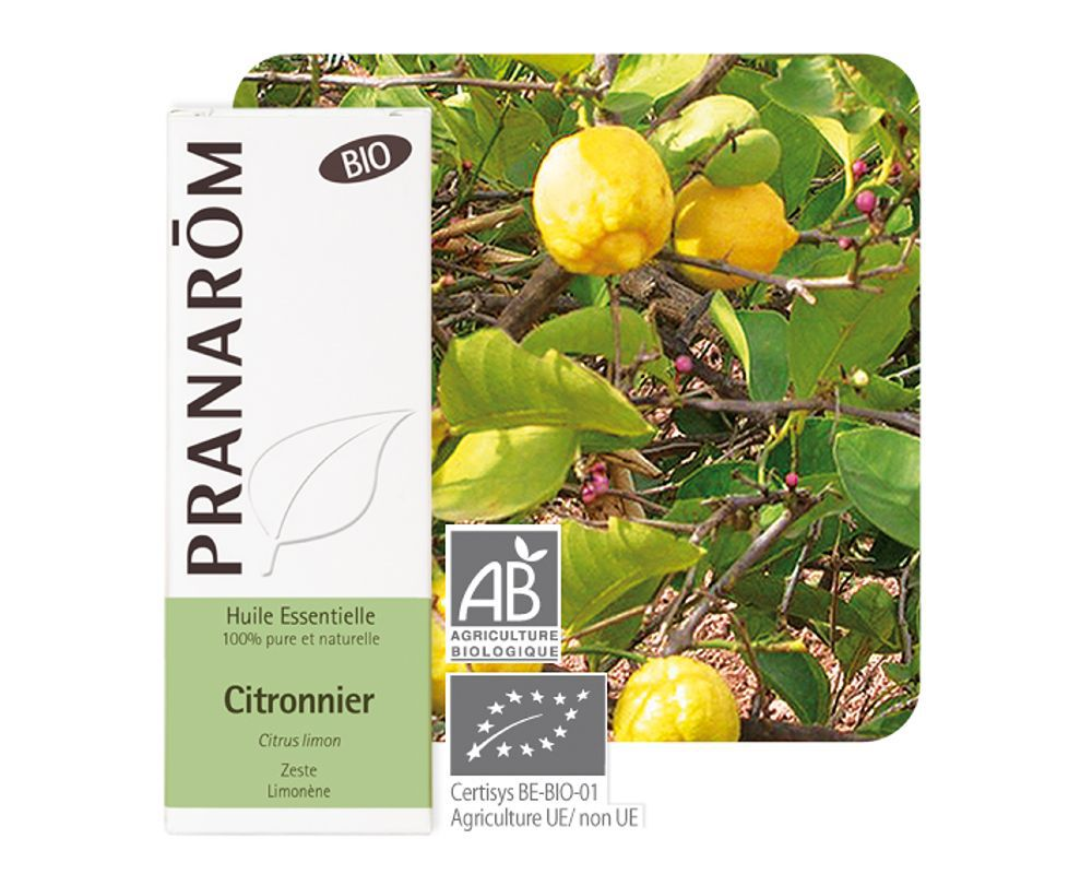 504_citronnier_(citrus_limon)_10_ml.jpg.thumb_1000x800