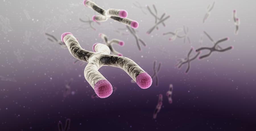telomere01 (1)