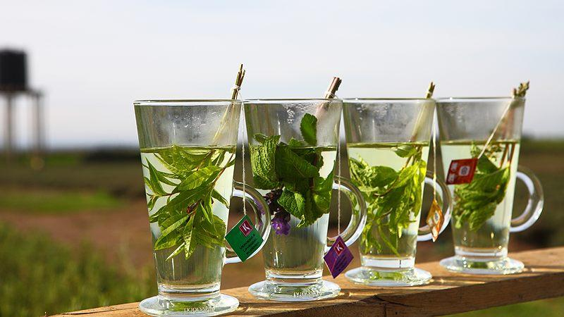 koppert-cress-infusions-feat
